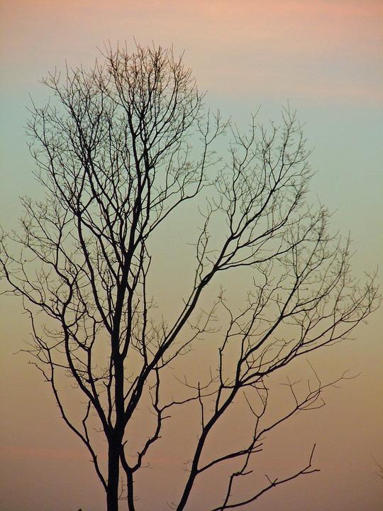 Tree, Log, Silhouette, Aesthetic, Kahl, Morgenrot
