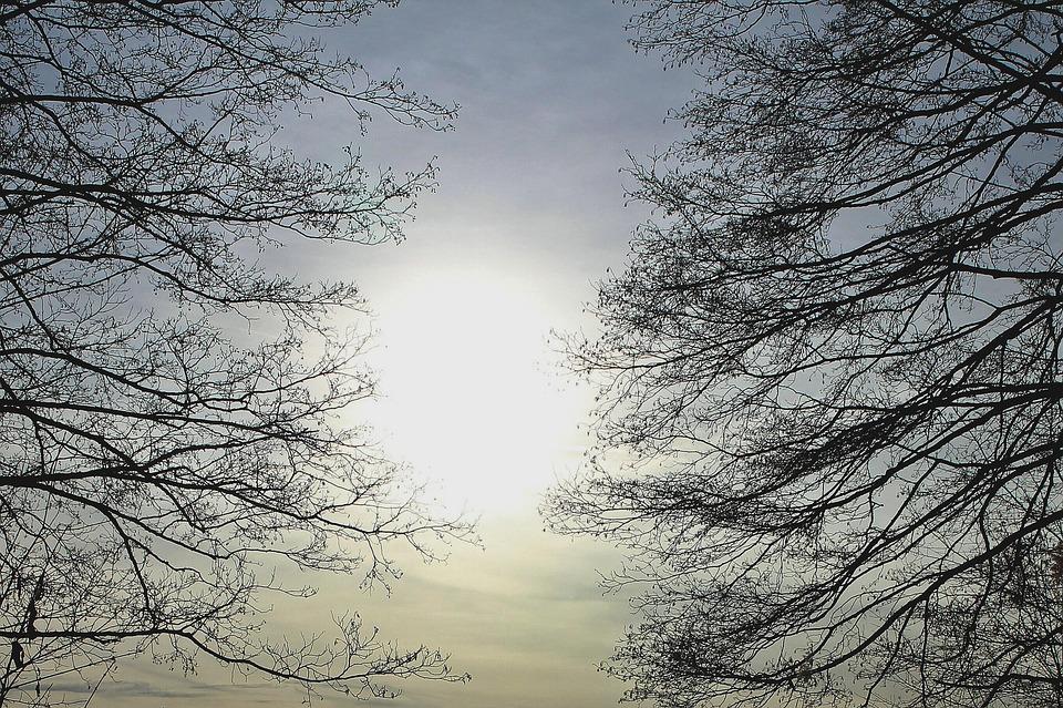 Branches, Back Light, Branch, Aesthetic, Sun, Mood