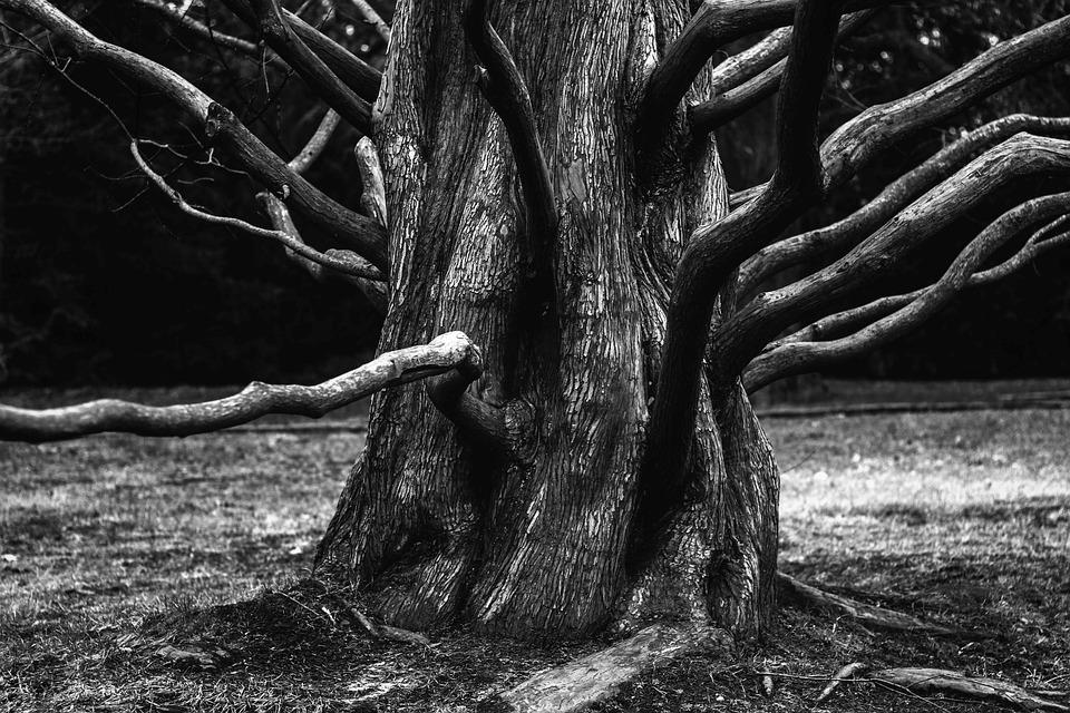 Root, Tree, Aesthetic, Branches, Bark, Tree Bark
