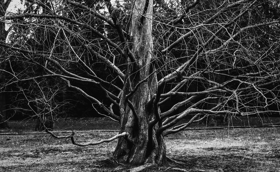 Tree, Plant, Aesthetic, Root, Branches, Grow