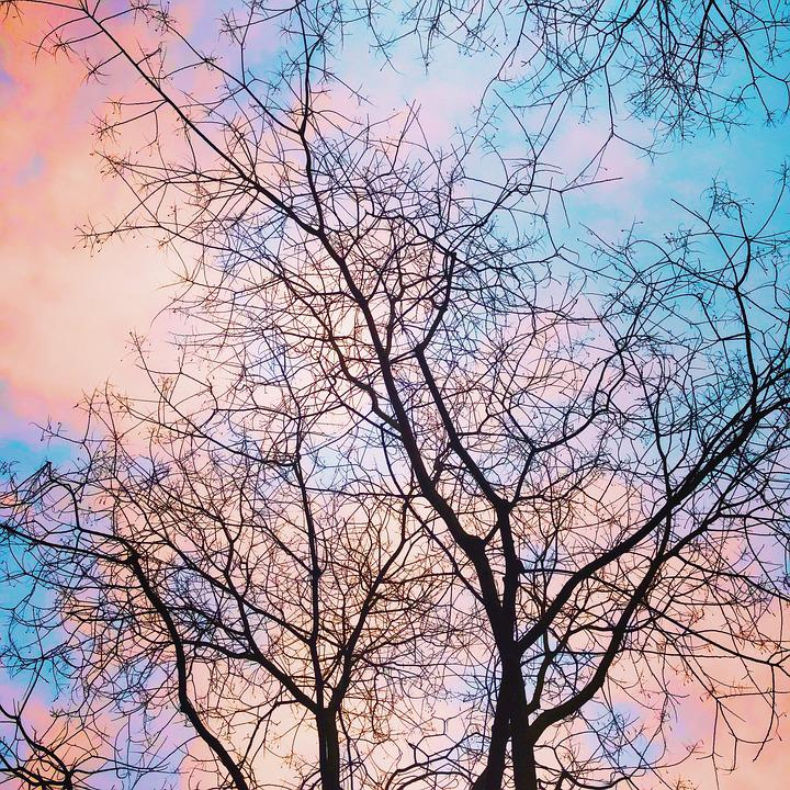 Trees, Aesthetic, Branches, Afterglow, Sky, Clouds