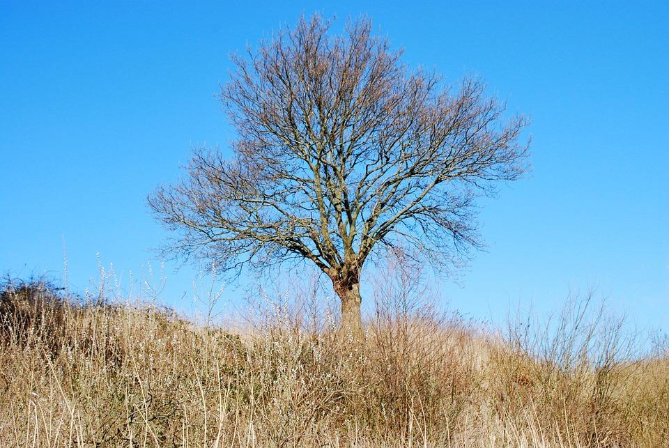 Tree, Winter, Aesthetic, Nature, Sun, Landscape