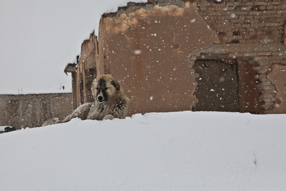 Dog, Winter, Snow, House, Afghanistan, Adobe House