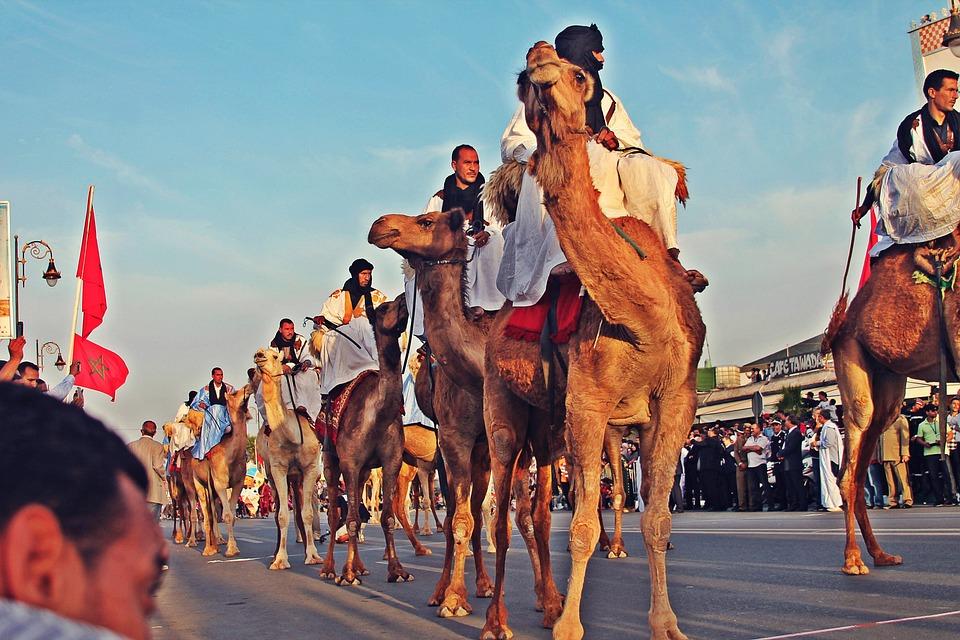 Sahara, Camel, Nature, Africa, Camels, Animal, Travel