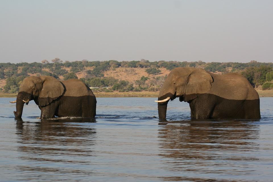 Nature, Animal, Elephant, Africa