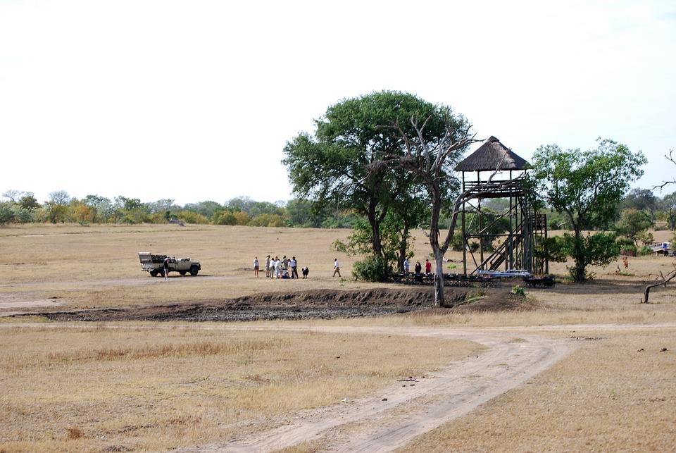 Safari, Bush Breakfast, Africa