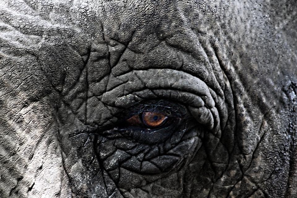 Elephant, Animal, Africa, Close, Eye