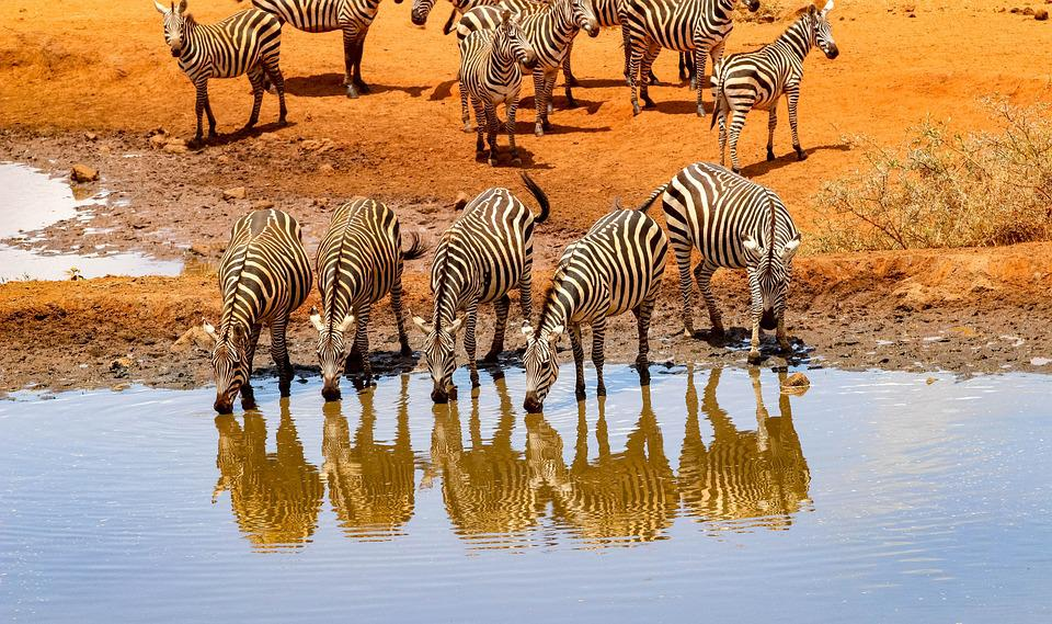 Africa, Kenya, Safari, Animal World, Nature, Landscape