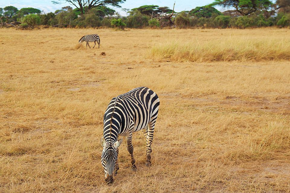 Africa, Kilimanjaro, Kenya, Nature, National Park