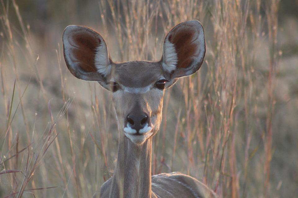 Safari, Africa, Animal, National Park, Animal Portrait