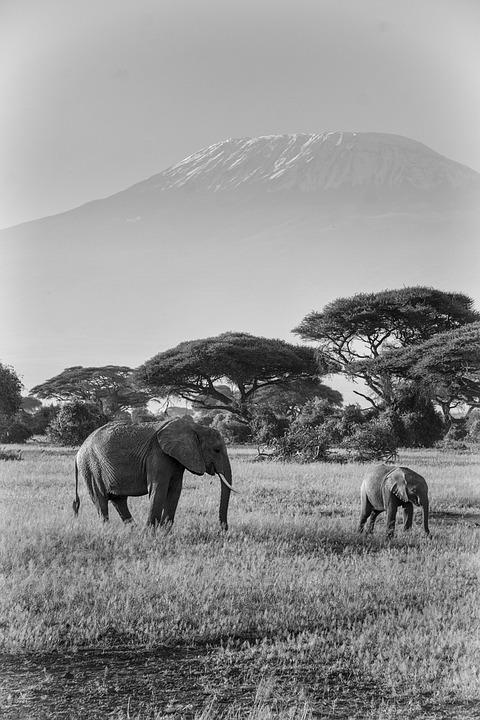 Elephant, Africa, Safari, Animals, Nature, Mammal