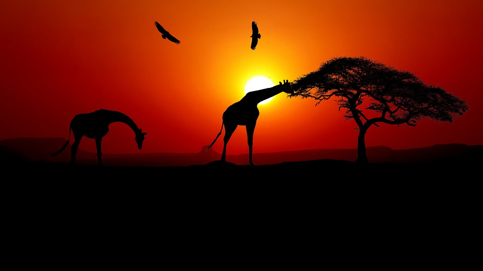 Sunset, Giraffe, Africa, Nature, Sky, Savannah, Animals
