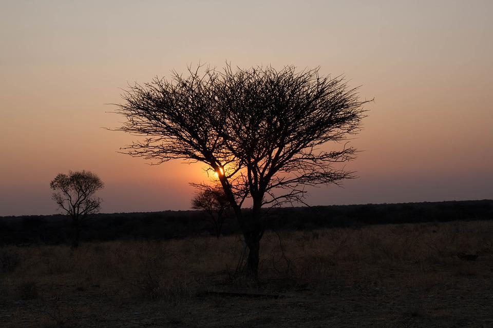 Namibia, Sunset, Africa, Safari