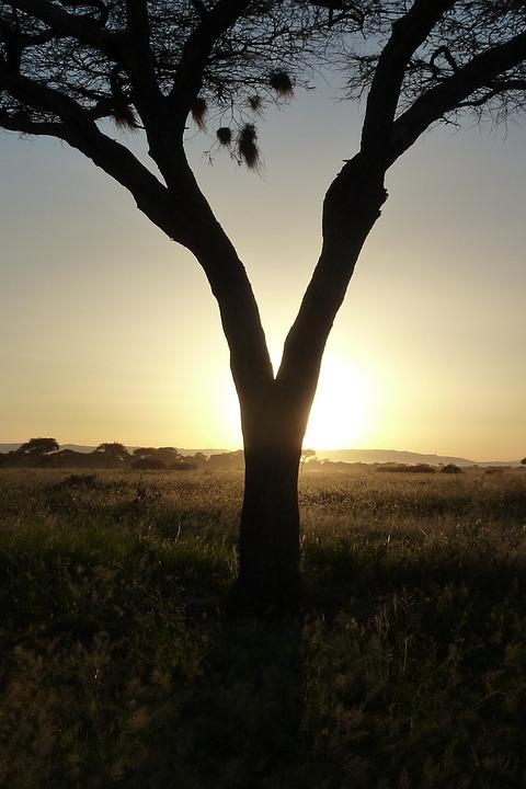 Tree, Sun, Sunset, Africa, Tarangire, Tanzania