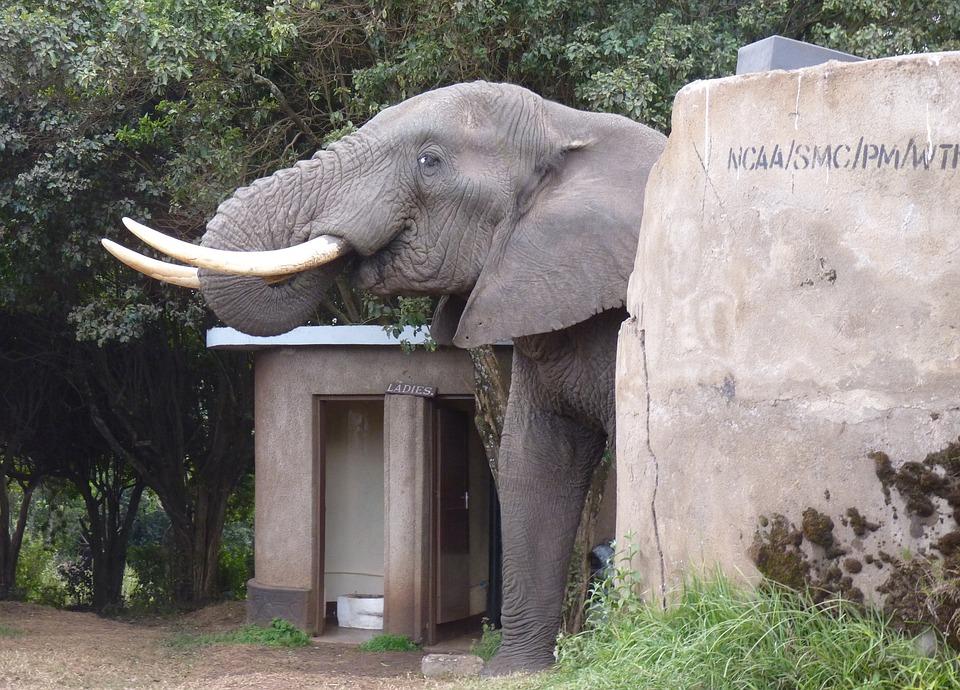 Elephant, Africa, Toilet, Tusks, Campsite