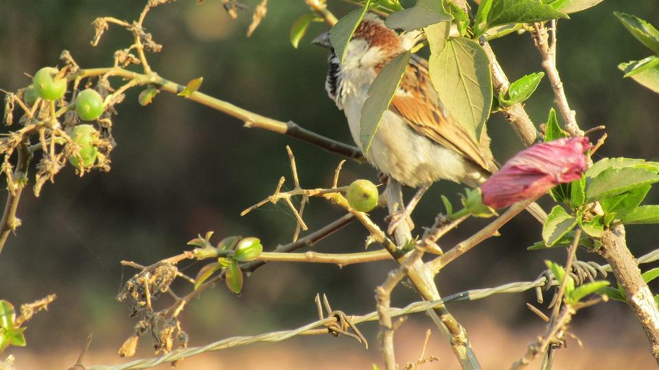 Nesting Bird, Zimbabwe Bird, Urban Bird, African Bird