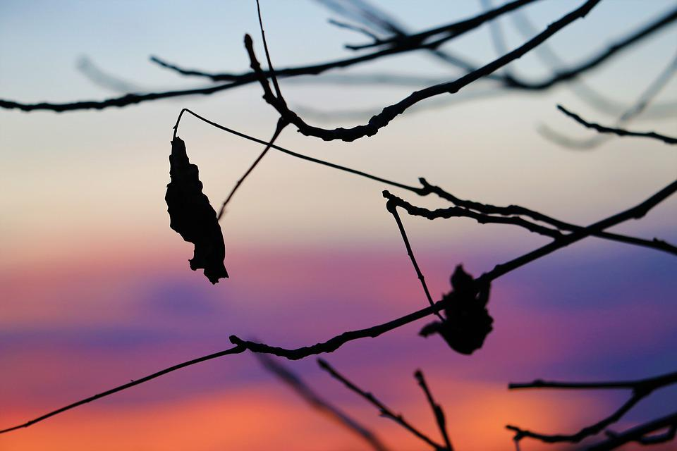Evening, Sunset, Dry Leaf, Afterglow, Mood, Nature