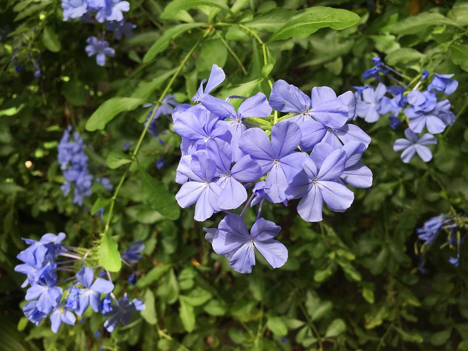Blue, Small Floral, Afternoon