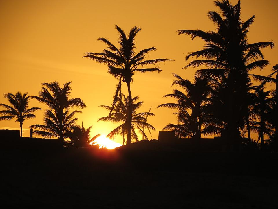 Sunset, Coconut Trees, Afternoon, Palm Trees