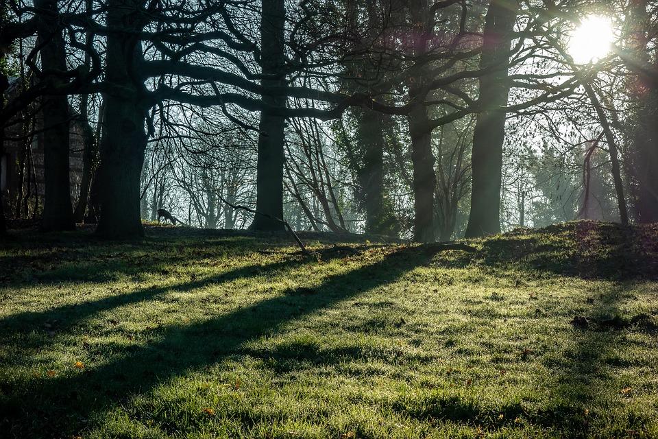 Landscape, Tree, Against The Light, Branch, Silhouette