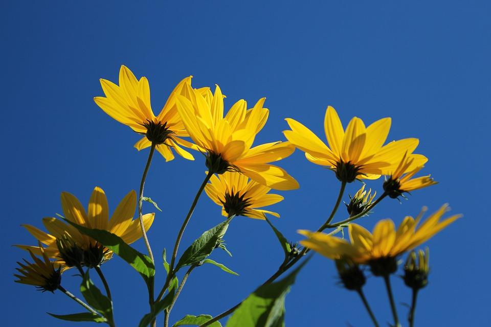 Flowers, Against The Sky, Sky, Sunny, Summer, Spring