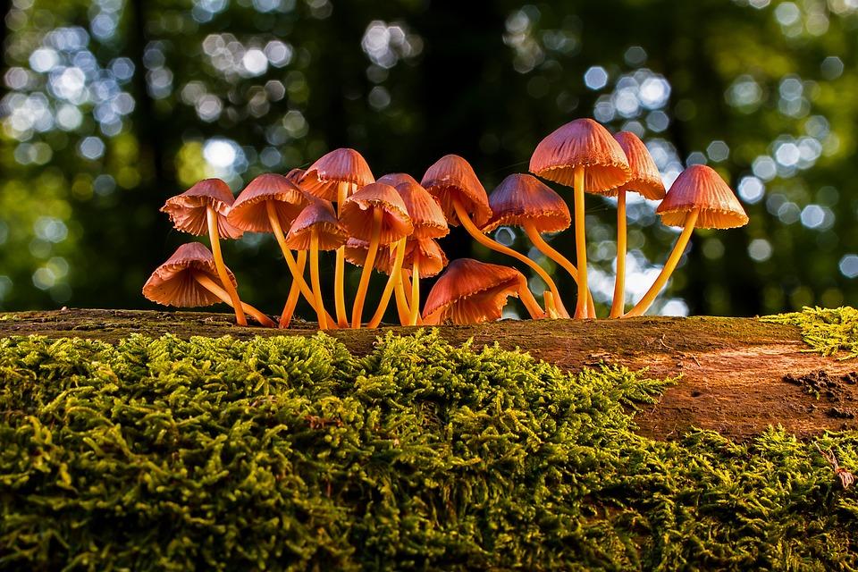 Mushroom, Mushrooms, Agaric, Small Mushroom