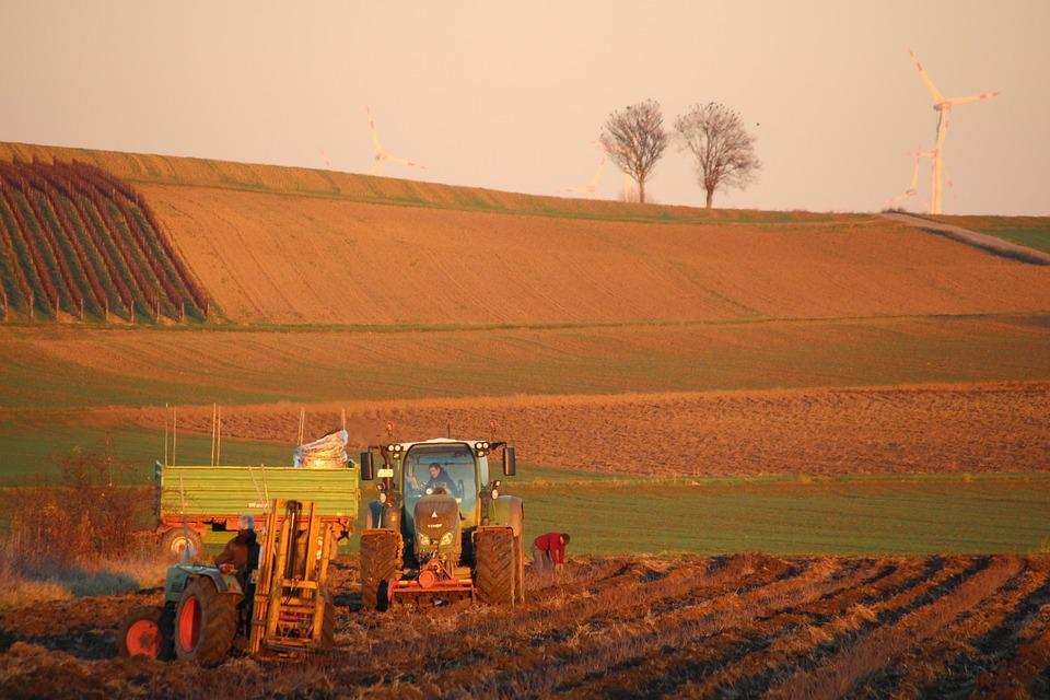 Agriculture, Tractor, Nature, Agricultural Machine
