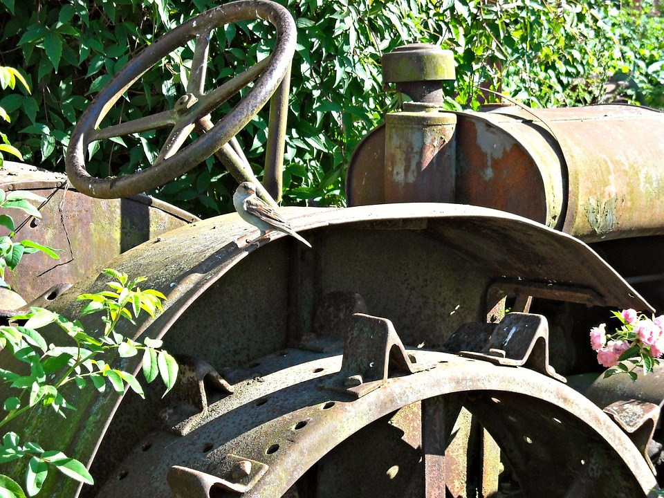 Agricultural Machinery, Old, Rusty, Tool, Bird, Nature