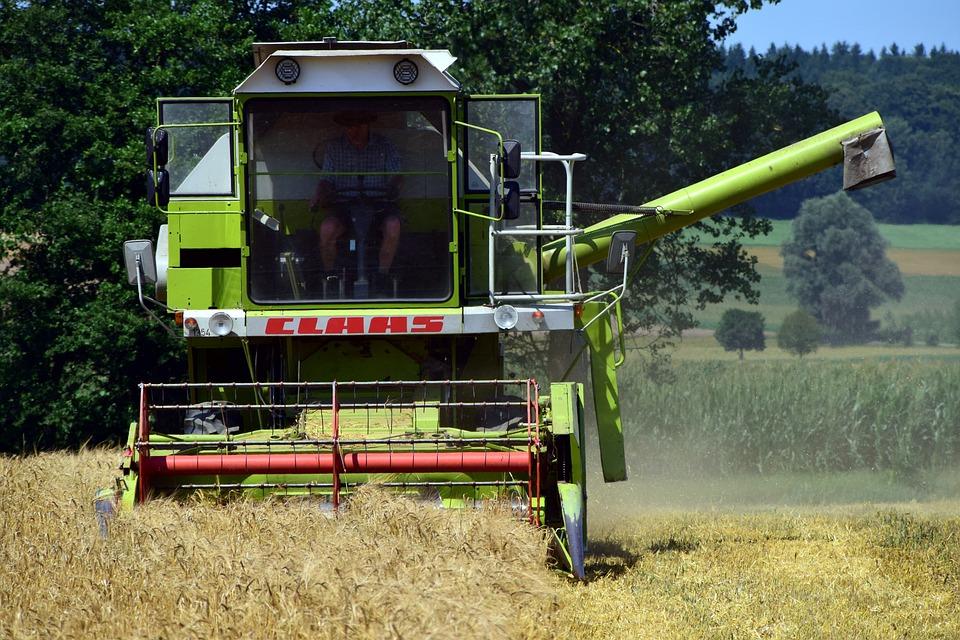 Harvest, Grain Harvest, Agriculture, Cornfield, Field