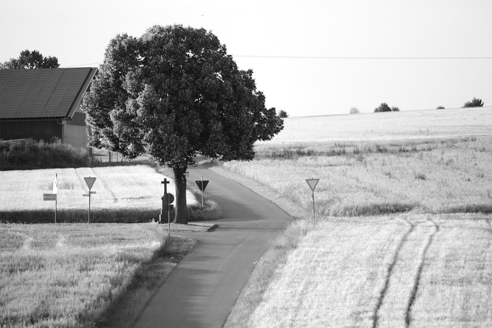 Road, Agriculture, Field, Cornfield, Nature, Rural
