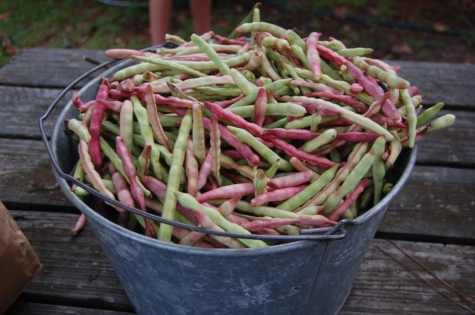 Peas, Bushel, Country, Southern, Agriculture, Food