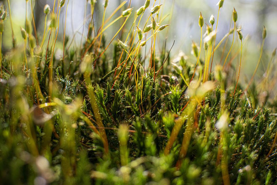 Nature, Earth, Environment, Green, Agriculture, Texture