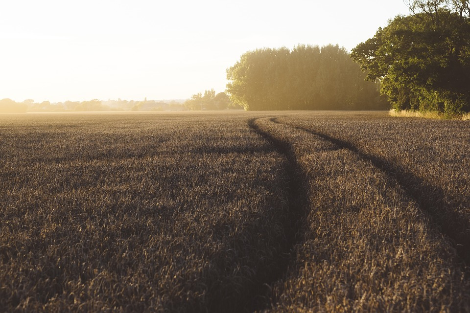 Agriculture, Countryside, Crop, Cropland, Dawn, Evening