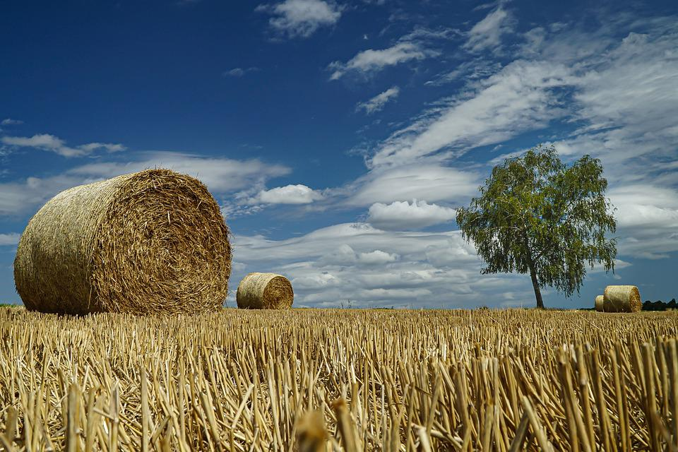 Stubble, Straw, Agriculture, Straw Bales, Field