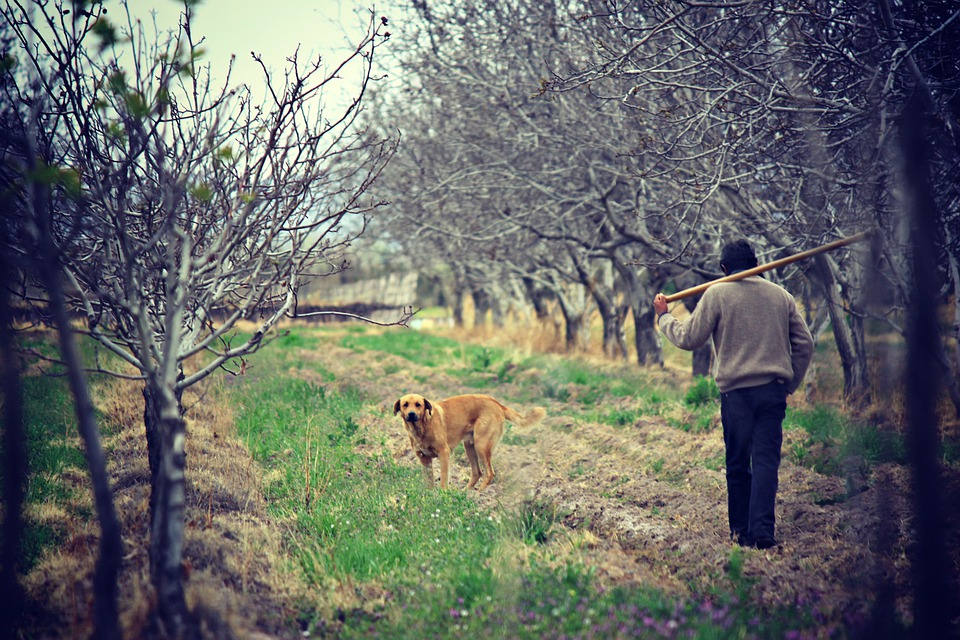 Field, Agriculture, Nature, Man, Worker, Fields, Dog
