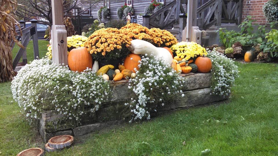 Fall, Harvest, Food, Autumn, Fresh, Season, Agriculture