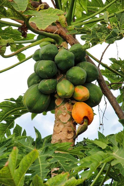 Bird, Fruit, Food, Grow, Leaf, Agriculture