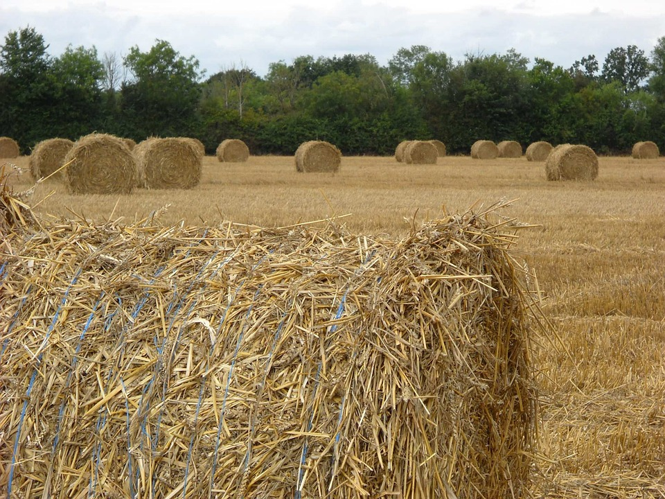Straw, Harvest, Agriculture
