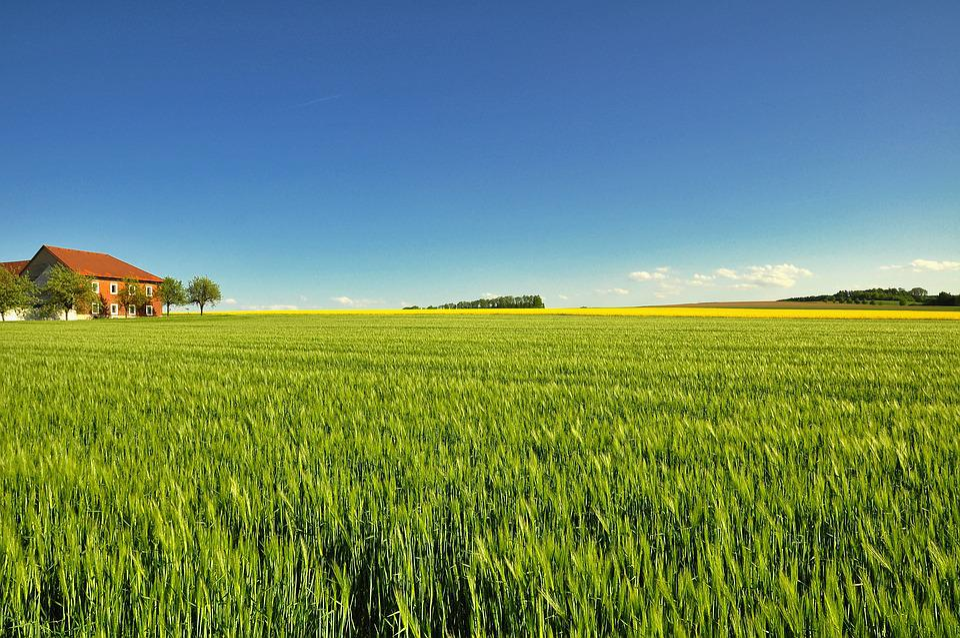 Field, Agriculture, Farm, Landscape, Panorama, Nature