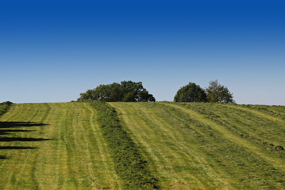 Agriculture, Meadow, Pasture, Summer, Mow, Landscape