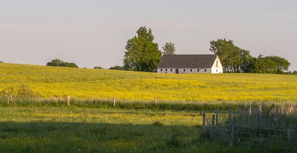 Canola Field, Mark, Agriculture, Natural, Landscape
