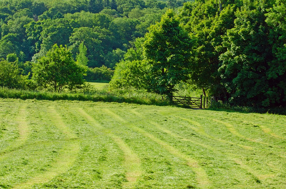 Flora, Meadow, Agriculture, Green, Trees, Tree, Leaves