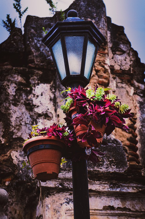Light, Plants, Nature, Landscape, Flower, Agriculture