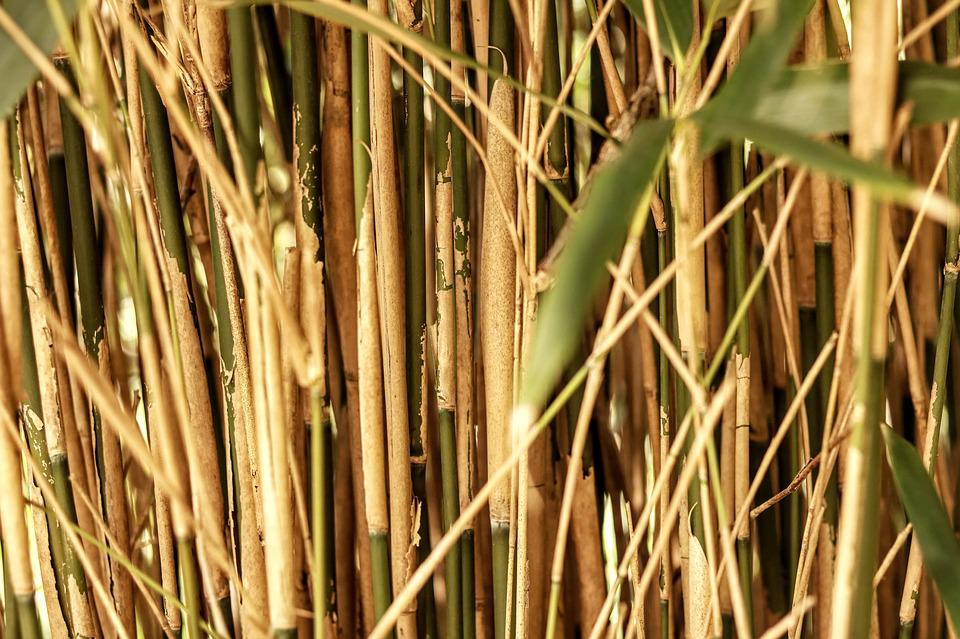 Plant, Nature, Food, Leaf, Bamboo, Reed, Agriculture
