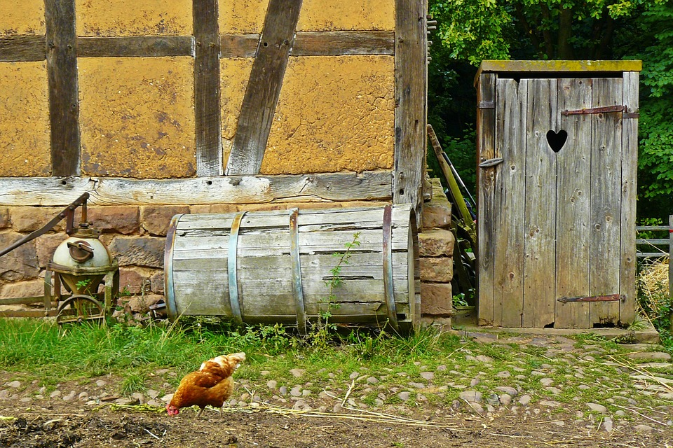 Chickens, Farm, Agriculture, Poultry, Country Life