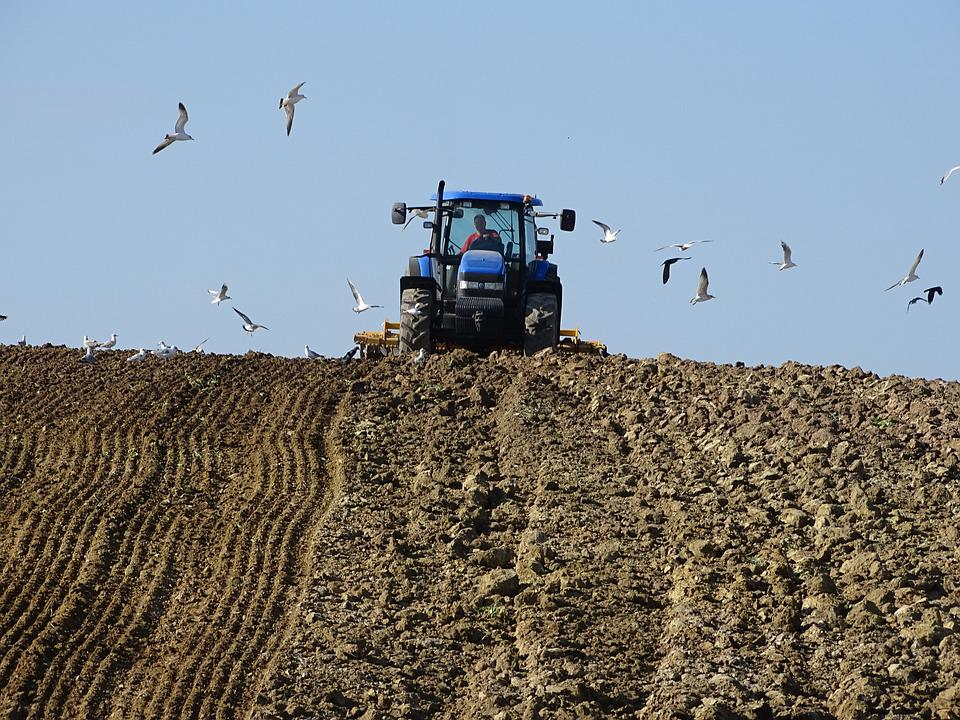 Agriculture, Tillage, Field, Role, Country House