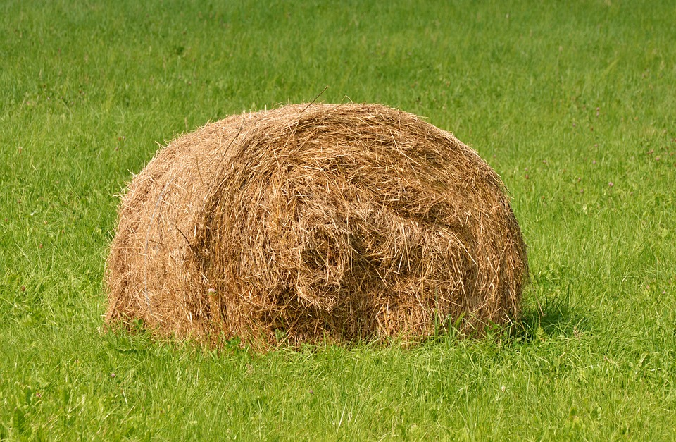 Hay Bales, Meadow, Agriculture, Hay, Straw Bales, Bale