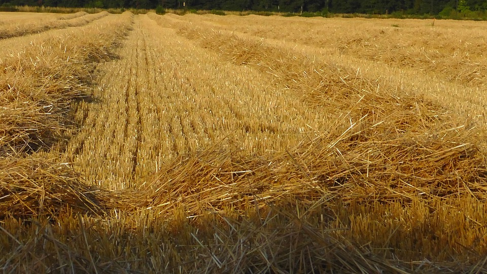 Grain Harvest, Straw, Nature, Field, Agriculture