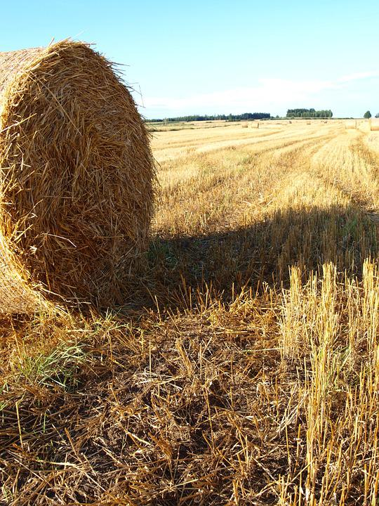 Straw, Field, Agriculture, Harvest