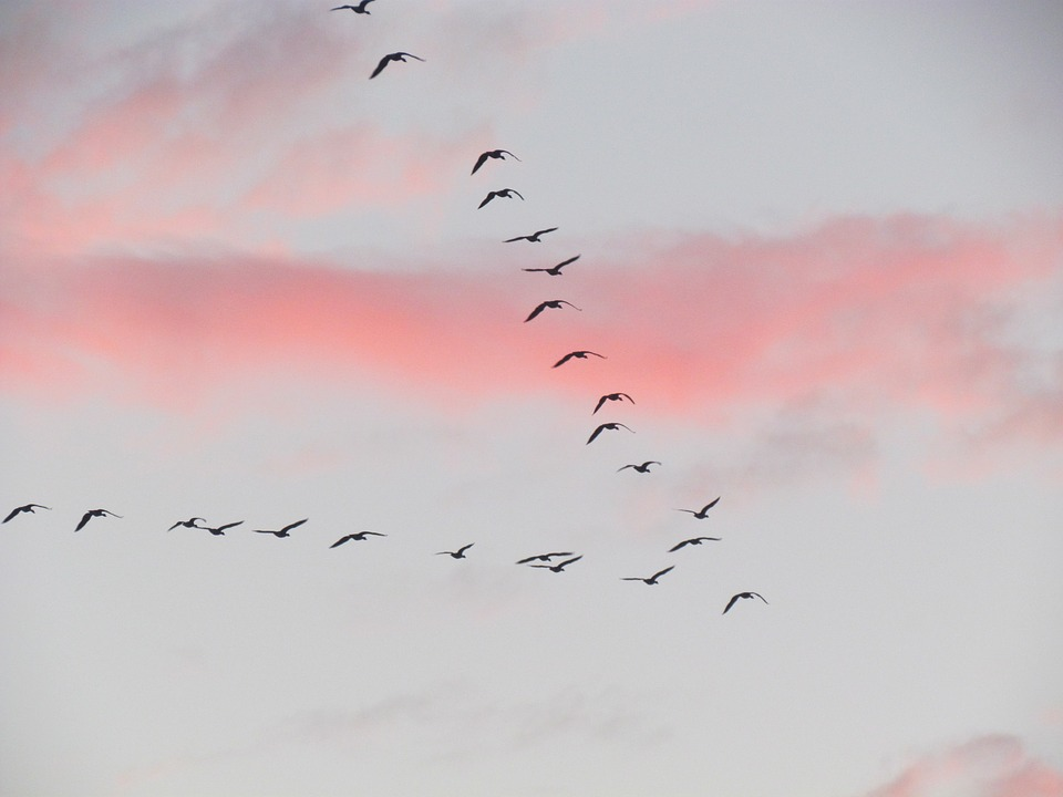 Migration, Bird, Clouds, Group Of Birds, Air, Fly